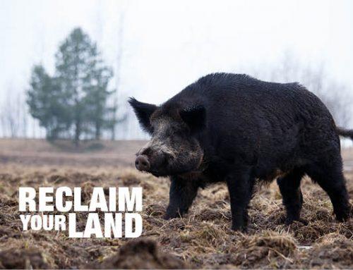 Hogeye – Reclaim Your Land