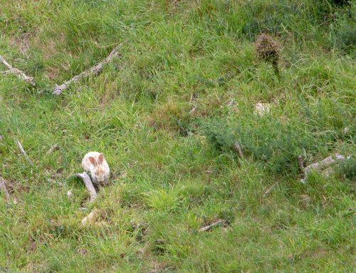 Acting on the rabbit problem